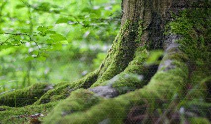 Orman Mühendisliğinde Neden Biz?